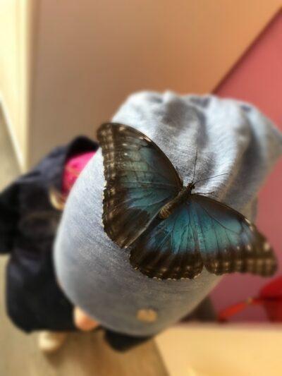 Бабочка Морфо на кепке у ребенка