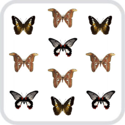 Салют из 10, больших тропических бабочек
