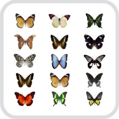 Салют из 15 разных, тропических бабочек