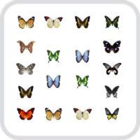 Салют из 18 тропических бабочек