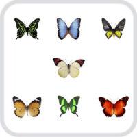 Салют из 7 разных, ярких тропических бабочек