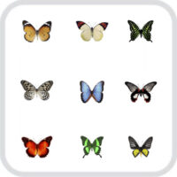 Салют из 9 разных, тропических бабочек