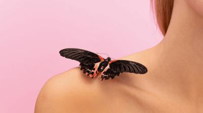Тропическая бабочка Papilio Rumanzovia, Парусник Румянцева