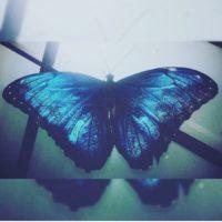 Картина с тропической бабочкой