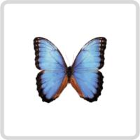 Бабочки живые