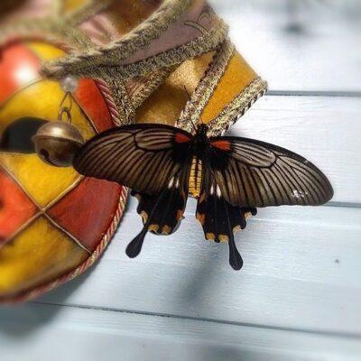 Papilio Memnon сидит на стене компанты