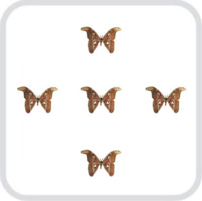 Салют из 5 тропических очень крупных бабочек