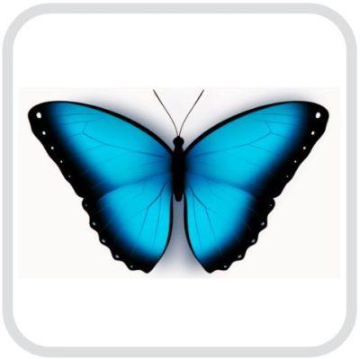 Синяя бабочка в рамке
