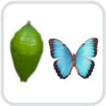 Куколки и коконы бабочек
