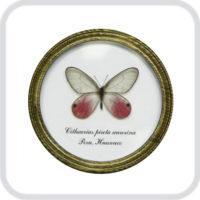 Cilhacrias pirela aurorina 1400-7