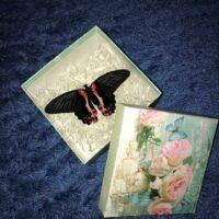 Парусник Румянцева в подарочной коробочке