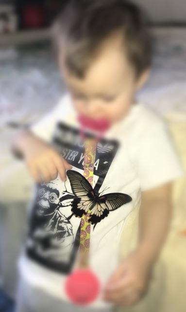Мальчик с тропической бабочкой