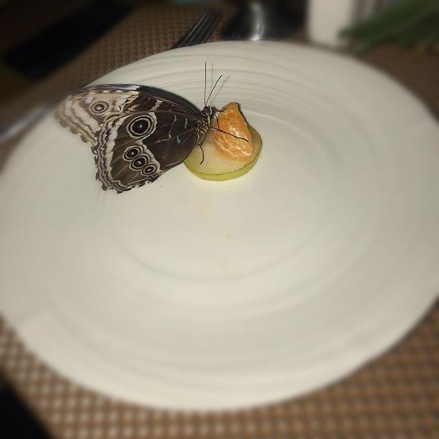 Апельсин на тарелочке, рацион бабочек
