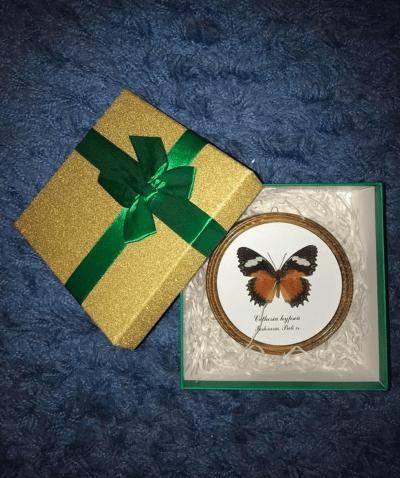 Cethosia hypsea в рамке готовый подарок