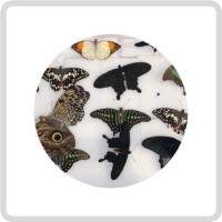 Сухие бабочки