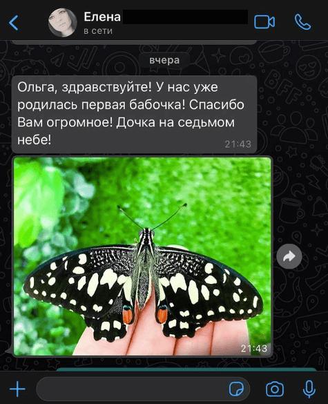 Отзыв клиента о магазине и живых бабочках
